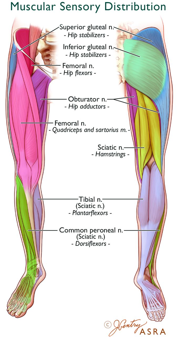 lower extremities diagram lower extremity regional anesthesia essentials of our current  lower extremity regional anesthesia